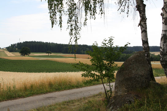 Fields around Waldenstein